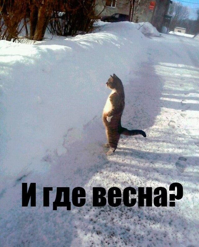Картинки по запросу смешные картинки про холодную весну